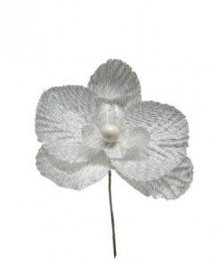 orchidee argente