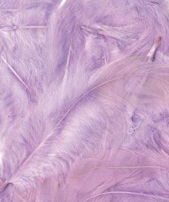plumes mauve parme lilas