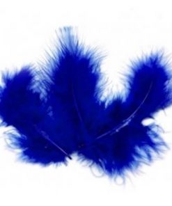 plumes bleu roi
