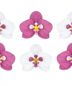 orchidées aloha